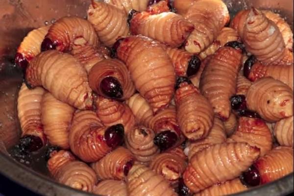 5 món ăn từ côn trùng nhìn đã thấy rùng mình của người Mỹ Latin - VCC